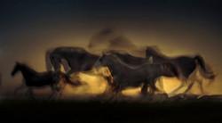 horse-2063742