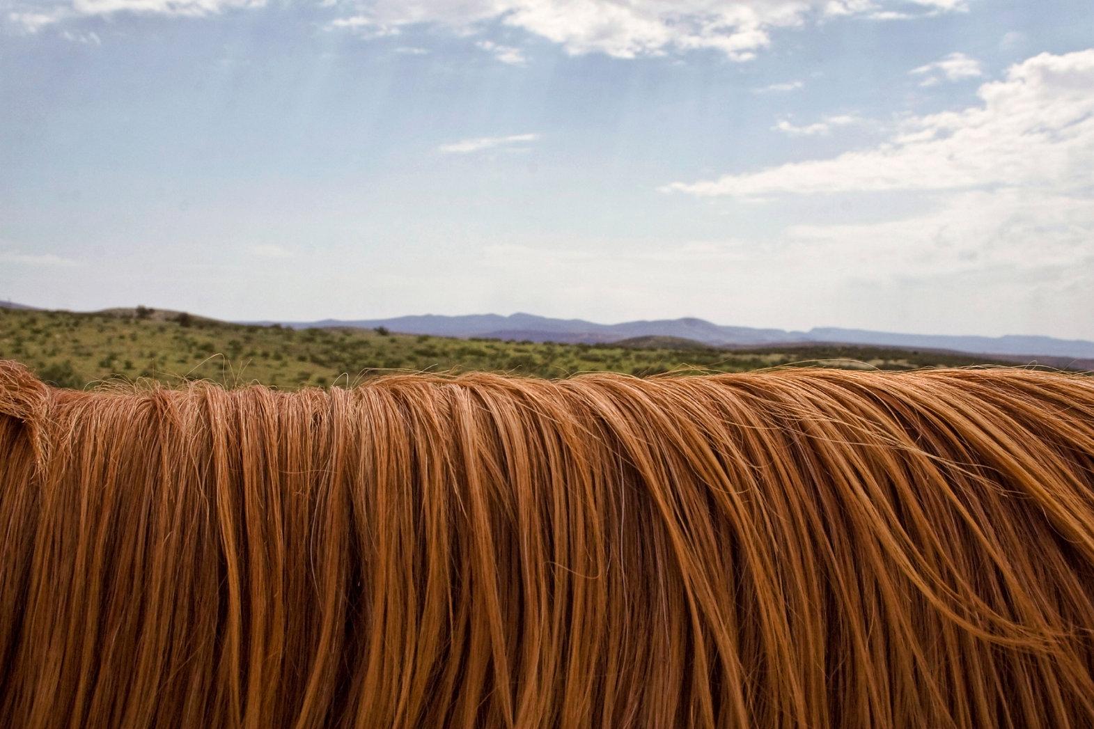 cours d'équitation dans le Gard