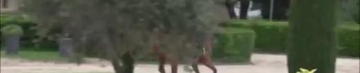 Cours particulier d'équitation près d'Alès aux Écuries d'Artuzac