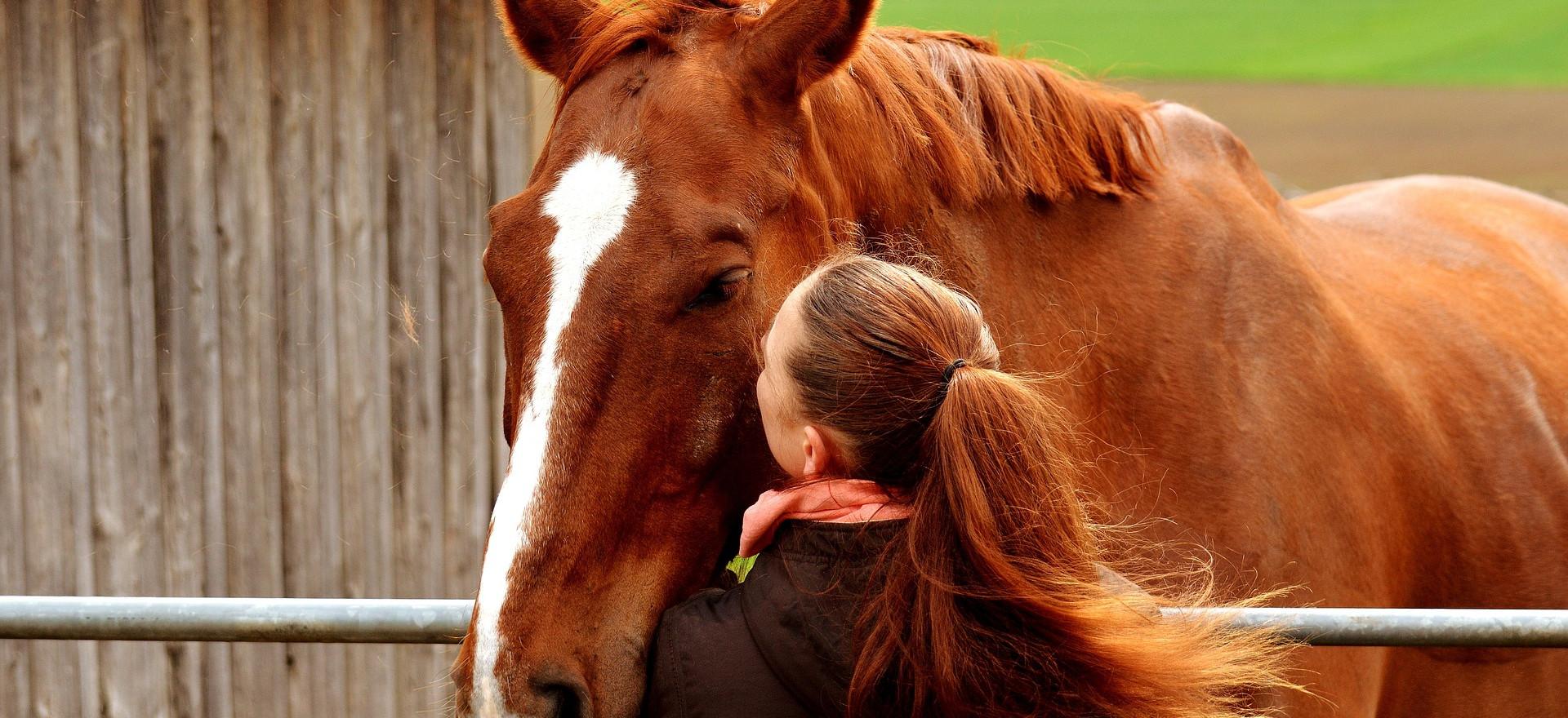 Les chevaux aiment