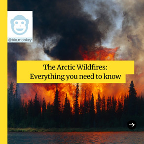 The Arctic Wildfires – What You Need To Know