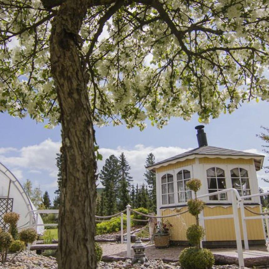 Söderbloms trädgård 1