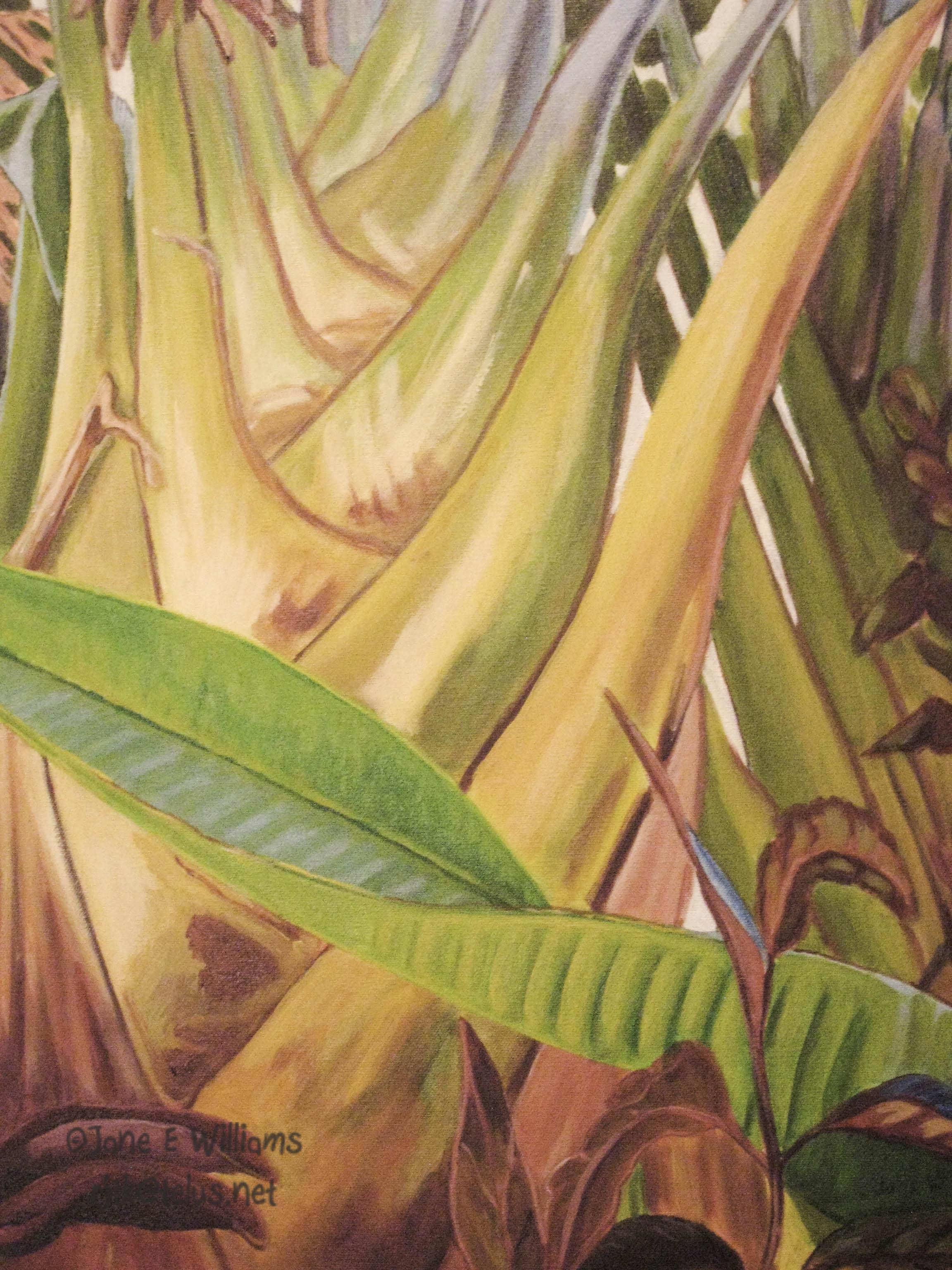 Tropical colour