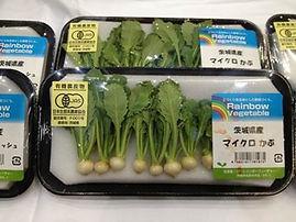 マイクロ根菜シリーズ