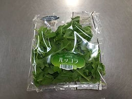 茨城県,有機野菜,ルッコラ