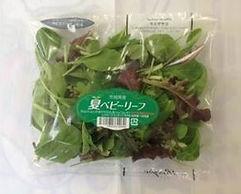 茨城県,有機野菜,ベビーリーフ