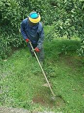 寺本果実園 草刈り作業1