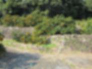 寺本果実園 伝統的な石垣