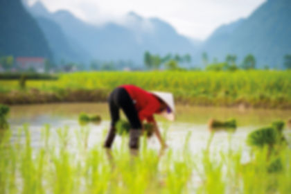 Vietnam01.jpg