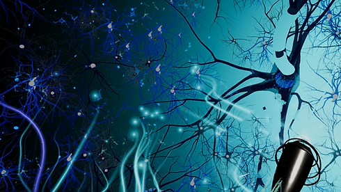 NeuroExplorer-Screenshot-04.png