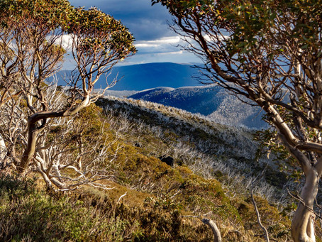 The Victorian Government are giving you $200, will you road trip to the mountains?