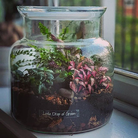 SOLD - We asked you what kind of Terrari