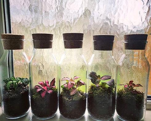 Tell us which one you like the most! _#Littledropofgreen #terrariumimaginarium #houseplantjournal #p