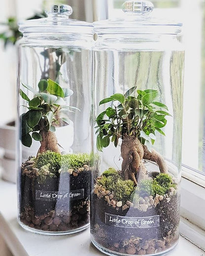 #minitree terrariums available to order! Direct Message us for details_edited.jpg