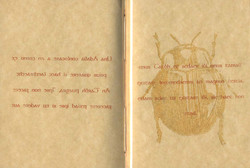 Aesop's Insects