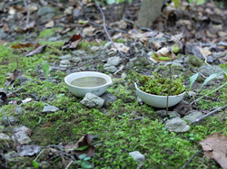 bowls III - reduced ecology
