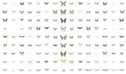 somnoptera specimens