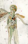Anatomias 1.jpg