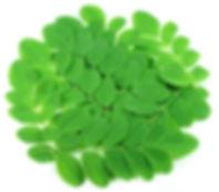 Moringa Leaves.jpg