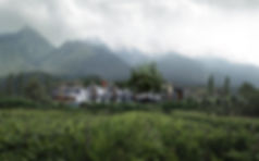 c5_Camera0050000_edited.jpg