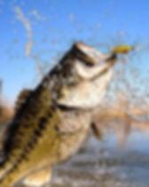 Texas Bass Fishing.jpg