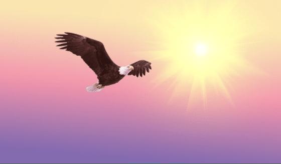 Oiseaux qui vol libre dans le bonheur