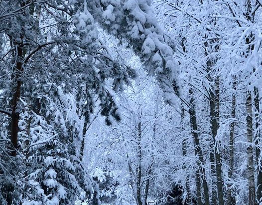 Sniegas  ❄️