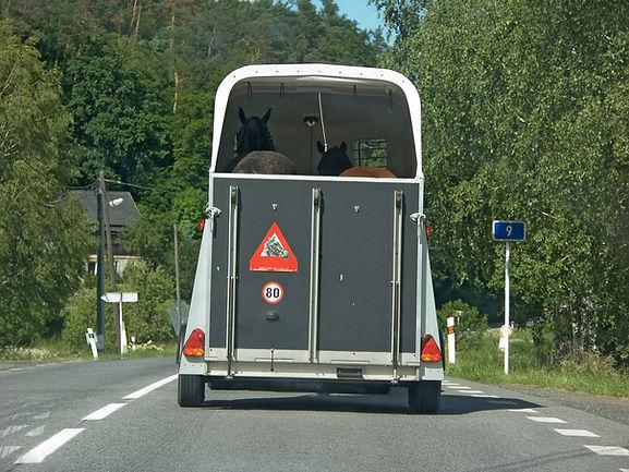 Cautious safe transportation of horses i