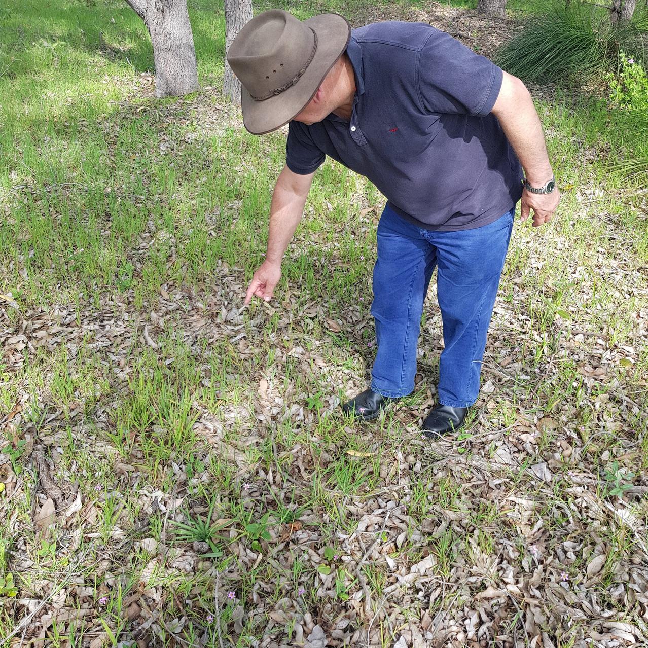 David Spring Wildflower Spotting