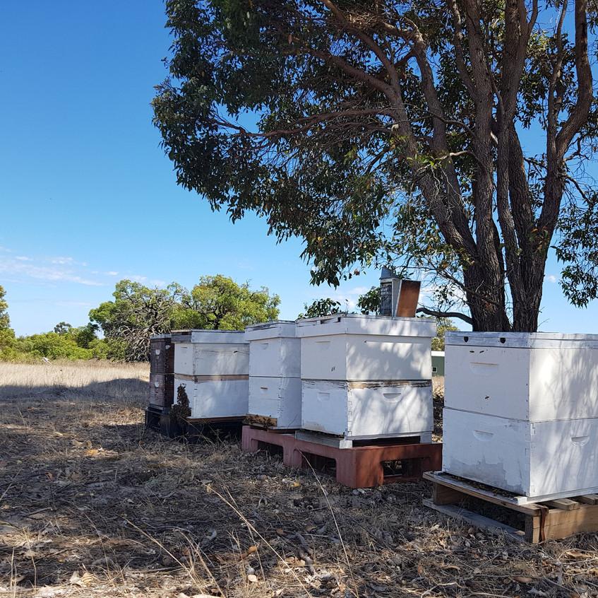 Gingin Hives