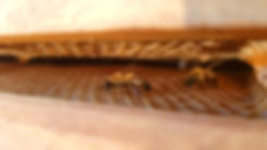Home page - bee on comb.jpg