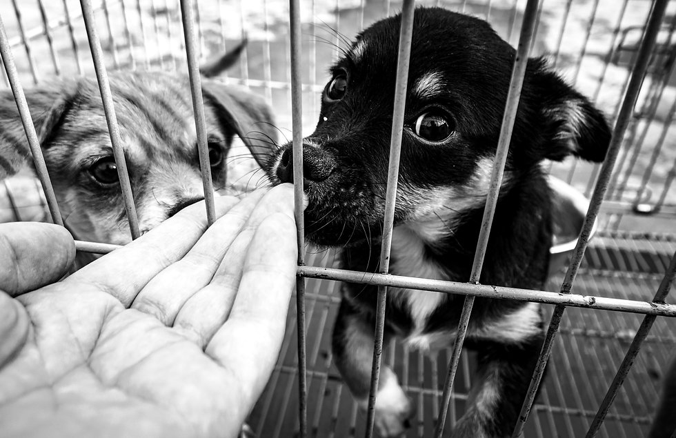 Close-up%20of%20male%20hand%20petting%20caged%20puppy%20in%20pet%20shelter.%20People%2C%20Animals%2C