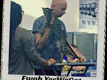 Ewok, che gatta orientale!