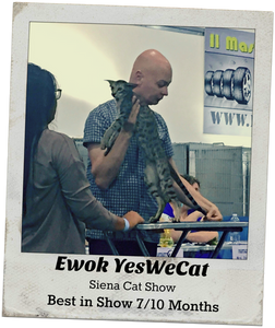 Ewok yeswecat