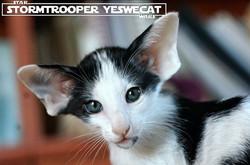 Stormtrooper YesWeCat
