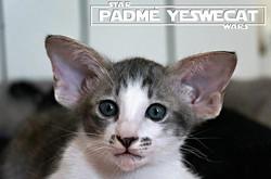 Padmé YesWeCat