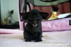 Darth Vader YesWeCat