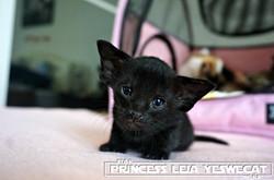 Princess Leia YesWeCat