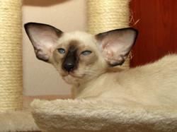Cat Global Sam