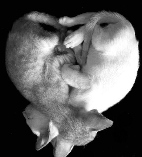 ❤️ #❤️#catlovers #catsofinstagram #yesw