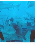 sharks&cameraDivers-em.jpg