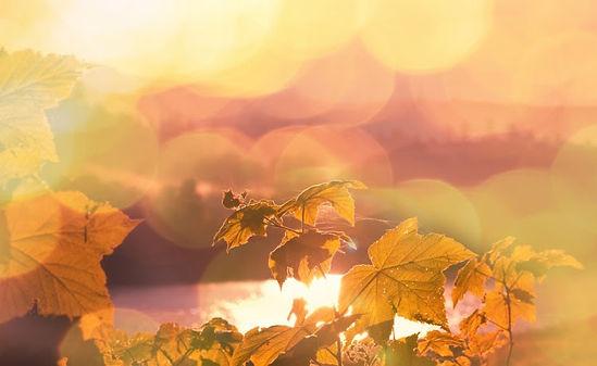 Fall Morning Leaves.jpg