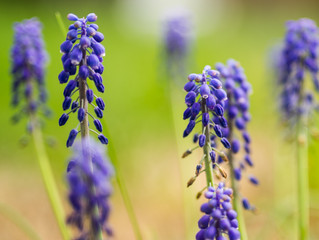 Top 5 Reasons To Use Native Plants In Your Landscaping This Season