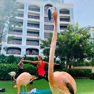 Chris Pronger, Lauren Pronger, Flamingos, Yoga, Flamingo Yoga