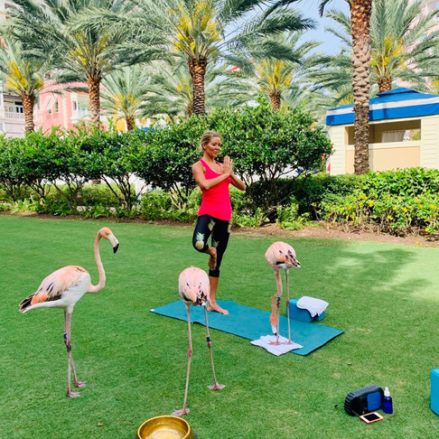 WHAT TO WEAR TO YOGA WITH FLAMINGOS