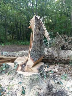 L'arbre a cassé pendant la découpe
