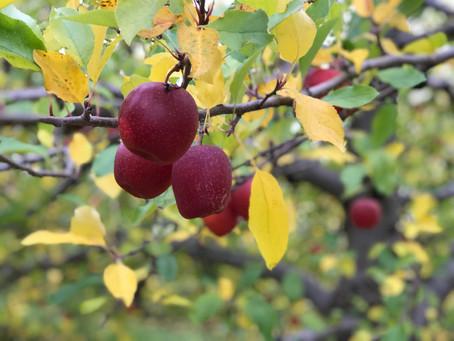 Enjoying Fruitfulness