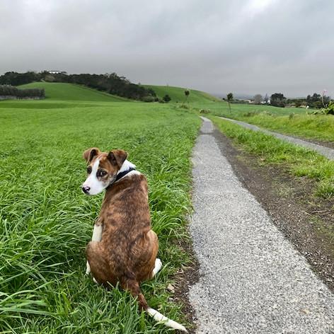 Ginja the Dog