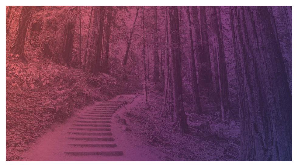 good-karma-forest-path-2_edited.jpg