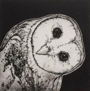OWL201901.jpg